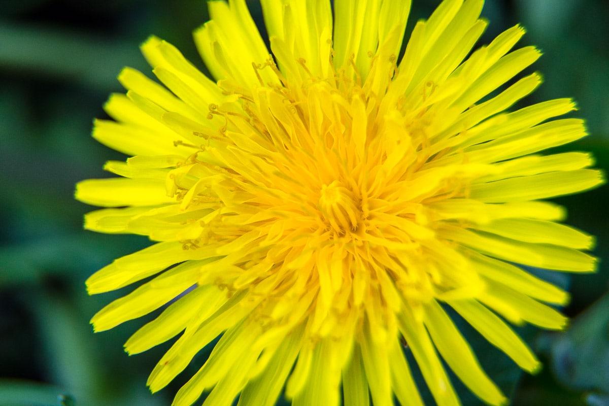 Frühling_002