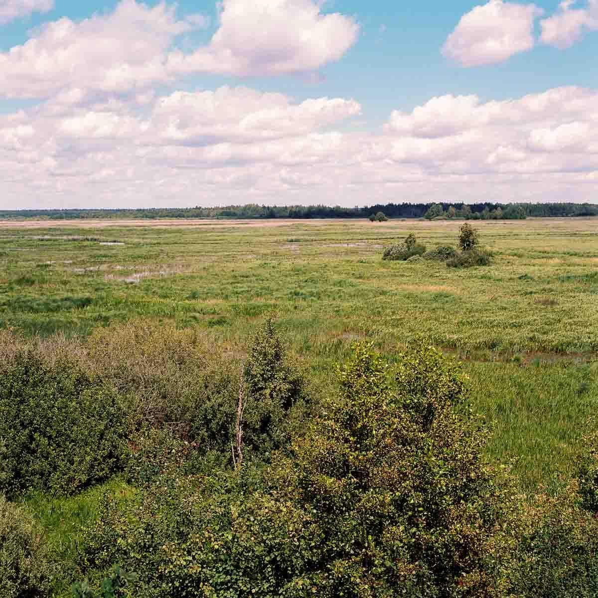 Sumpfgebiet Film: Kodak Portra 160