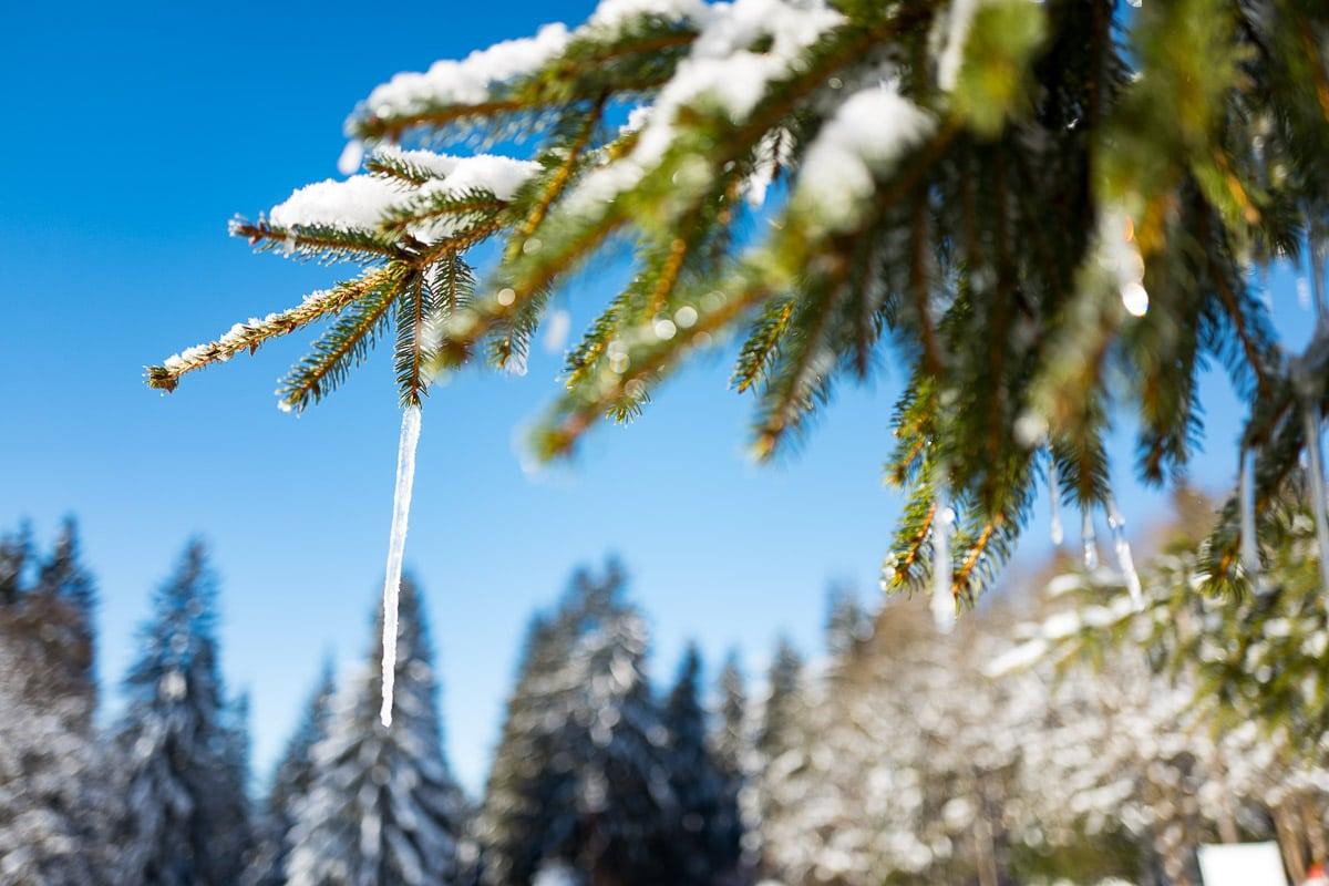 2017-01-22-Winterwald_004