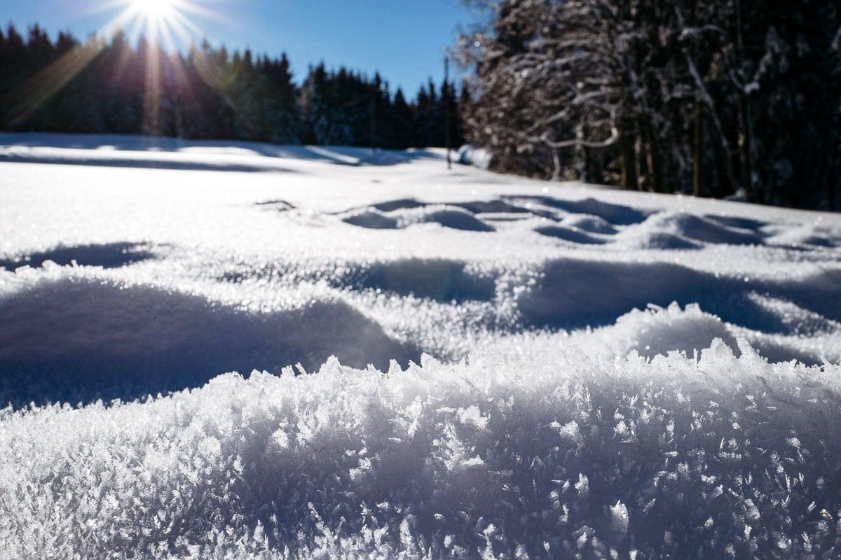 2017-01-22-Winterwald_007
