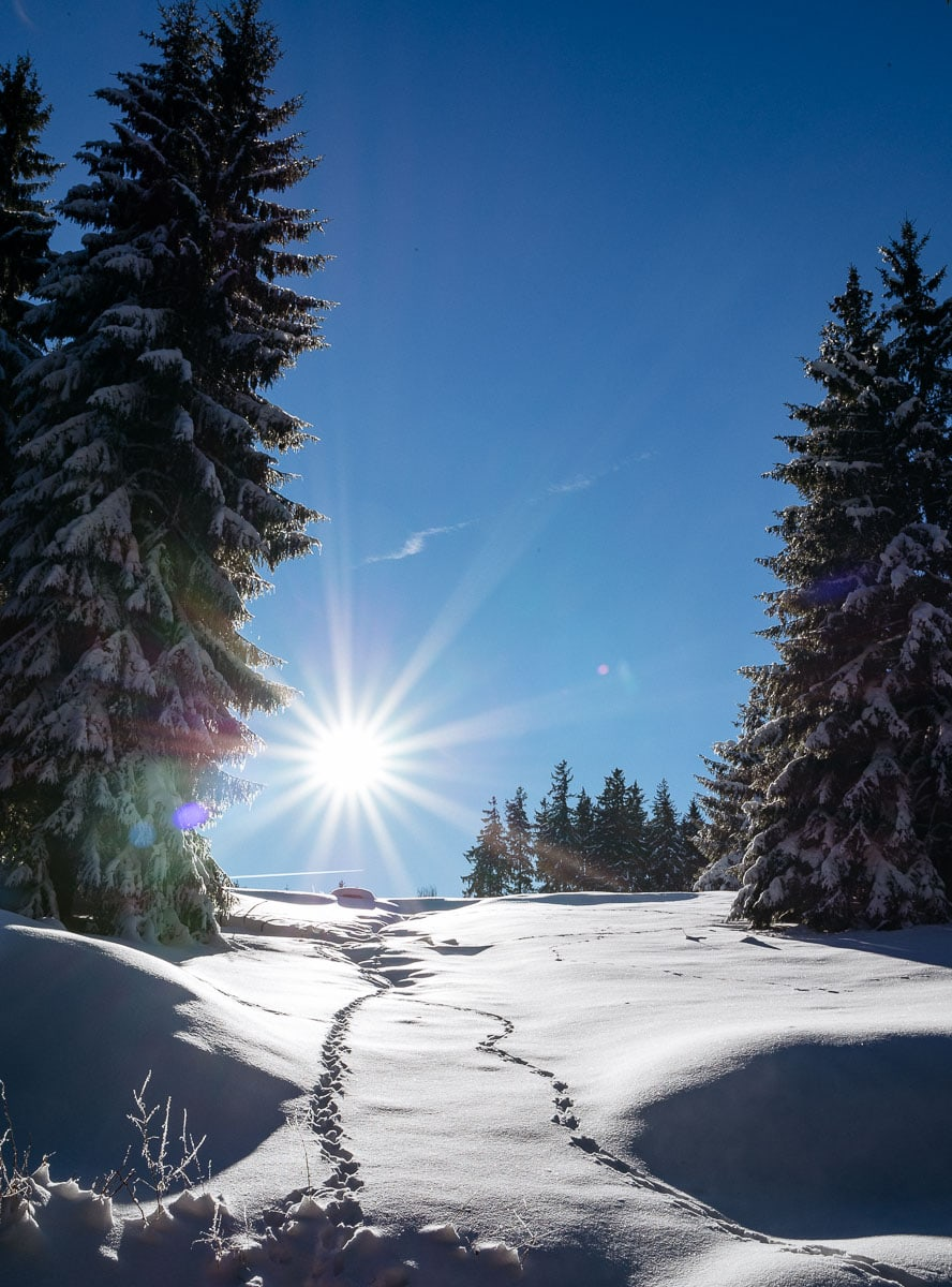 2017-01-22-Winterwald_008