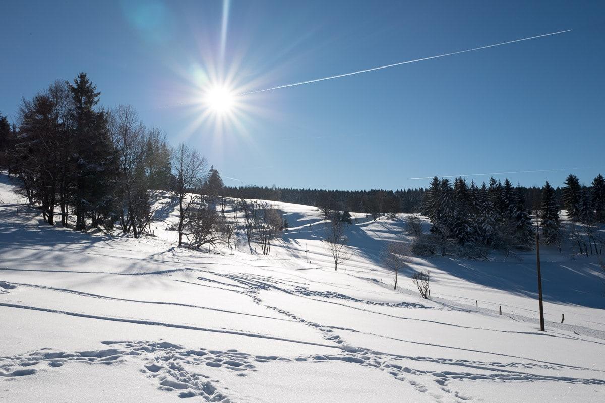 2017-01-22-Winterwald_010