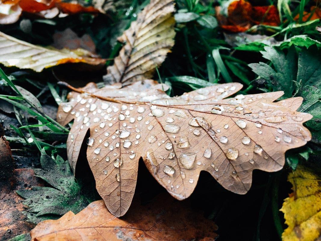 Herbst_20151024_002